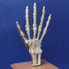 innervation-hand-finger-model