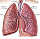 lung-medical-exhibits