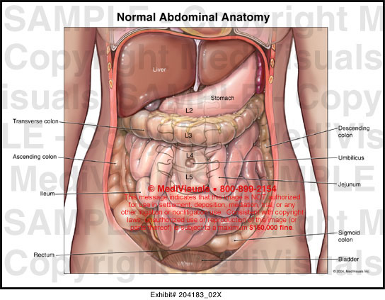 In Diagram And Pituitary Gland moreover The Nervous System together with EndocrinePQs1 furthermore Pituitary Gland Diagram further Thyroid Do. on endocrine system brain diagram