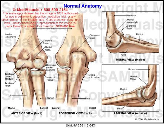 Anatomy of elbow