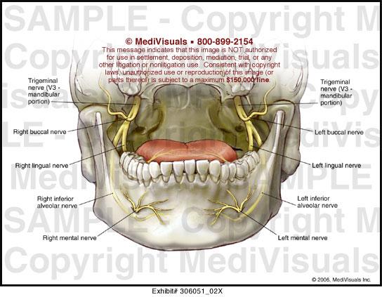 Oral Nerves 51