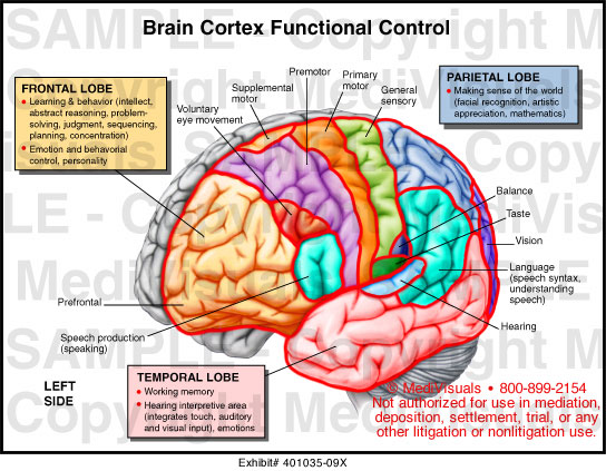 a paper presentation on brain controlled The human brain is the command center for the human nervous system a project to map the structure and function of the human brain has been proposed  the left brain controls all the muscles on .