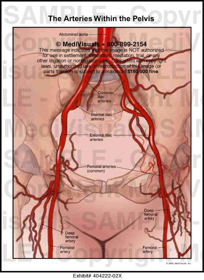 Pelvic veins anatomy