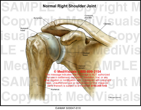 the shoulder joint essay The shoulder joint is a high claimed and important mobile joint of the human body read more about this interesting joint in this article.