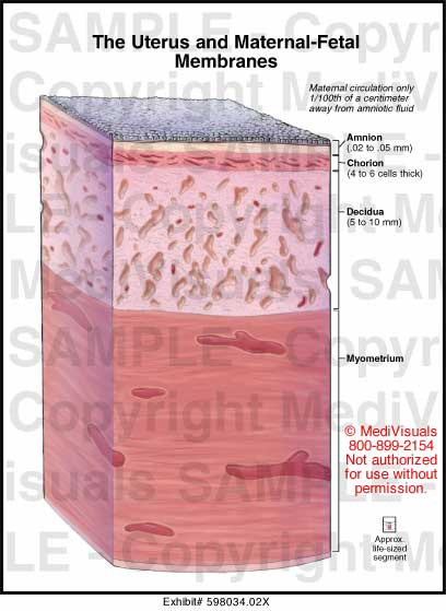 5065209 together with Chapter 5 Tissues 8702629 as well Lab exercise 05 tissues furthermore Body fluid differential tutorial further ZW5kb21ldHJpYWwgbGF5ZXJz. on serous membranes of the body