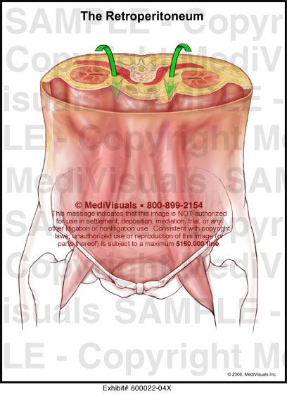 Medivisuals The Retroperitoneum Medical Illustration