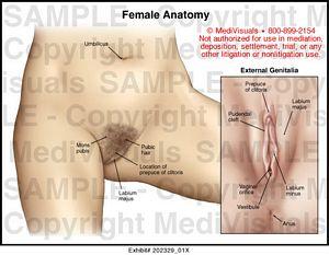 Female Anatomy - 202329_01X