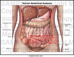 normal abdominal anatomy medical exhibit, Skeleton