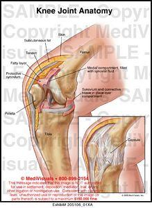 Knee Joint Anatomy Medical Illustration Medivisuals