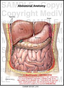 Abdomen anatomy pictures