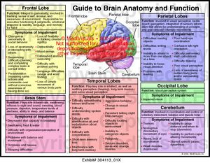 Guide to Brain Anatomy and Function Medical Illustration ...