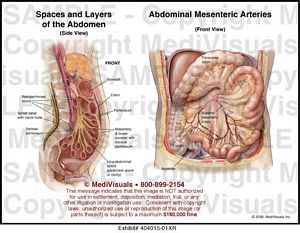 abdomen medical illustration exhibits, Skeleton