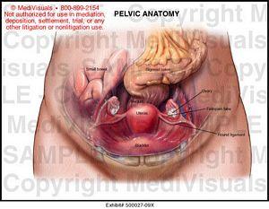 Female bowel anatomy