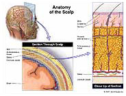 scalp-anatomy