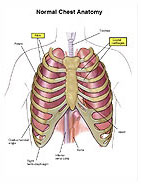 Chest pictures of anatomy