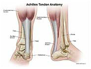 Achilles-tendon-anatomy