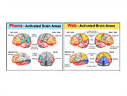 activated-brain-areas