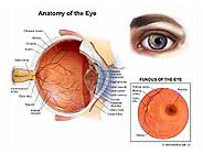 eye-anatomy