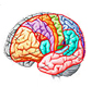 Brain Cortex Functional Control Exhibits