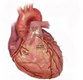 Cardiology Medical Negligence Exhibits