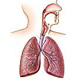 respiratory-medical-exhibits