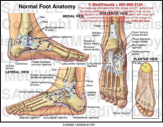 Xr on Left Foot Tendons Diagram