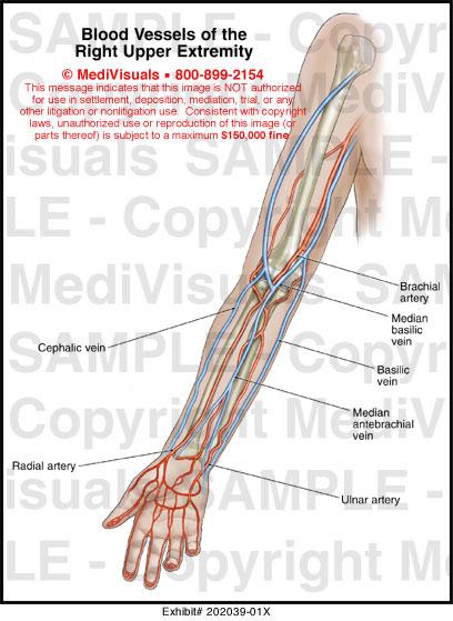 Diagram Of Arm Vessels