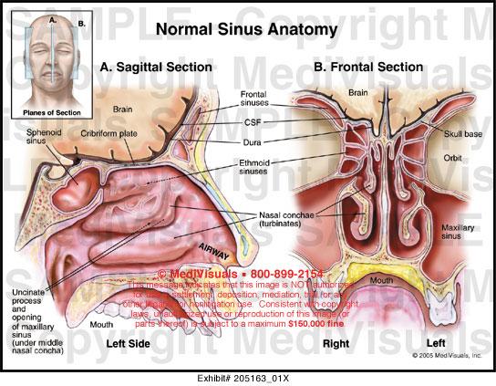 arm diagram skin engine rocker arm diagram medivisuals normal sinus anatomy medical illustration