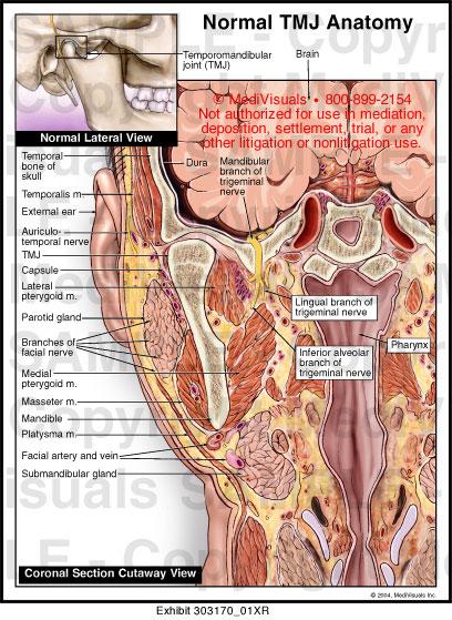 Medivisuals Normal Tmj Anatomy Medical Illustration