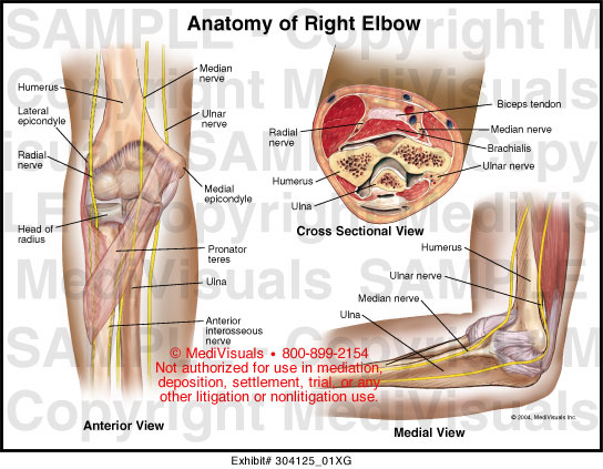 Left elbow anatomy
