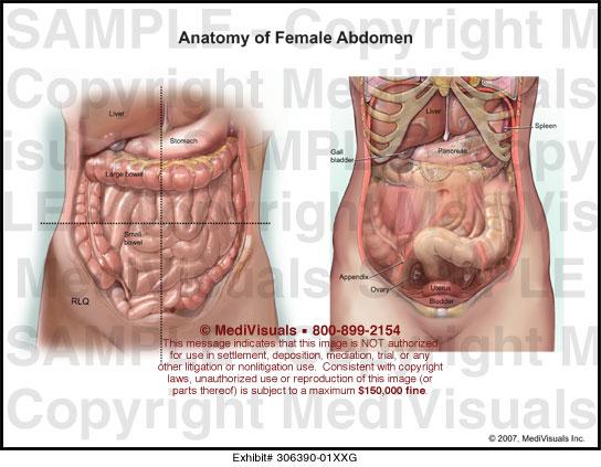 Anatomy Of Female Abdomen Medical Illustration Medivisuals