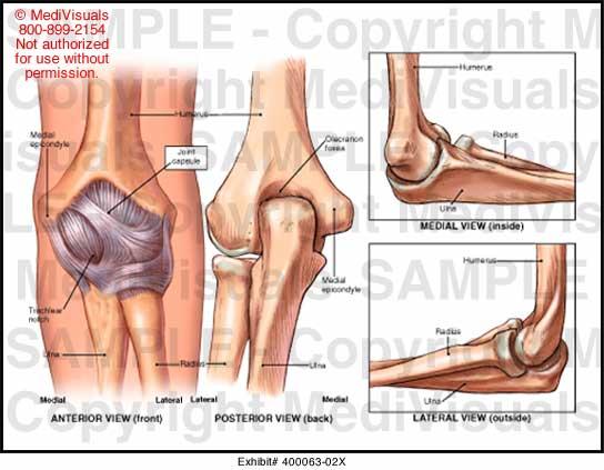 left elbow joint medical illustration medivisuals  medivisuals