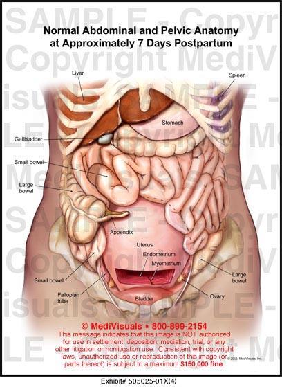 medivisuals normal abdominal and pelvic anatomy at