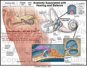 anatomy-associated-hearing-balance