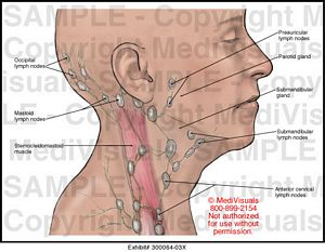 Lymph       Nodes    of the    Head    and Neck Medical Illustration