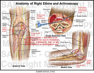 anatomy-right-elbow-arthroscopy