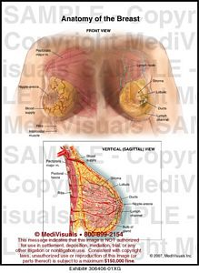 anatomy-breast