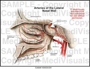 arteries-lateral-nasal-wall