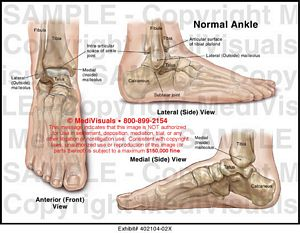 Normal Ankle Skeletal Anatomy