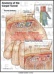 carpal-tunnel-anatomy