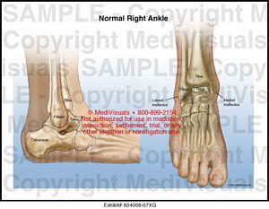 Normal Right Ankle Anatomy
