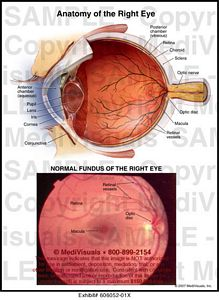 right-eye-anatomy