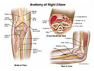 right-elbow-anatomy