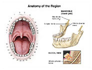 anatomy-region