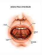 anterior-floor-mouth