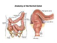normal-colon-anatomy