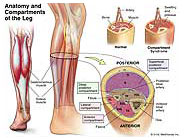 anatomy-compartments-leg